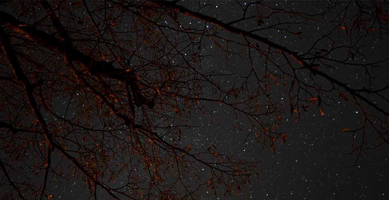 Sternenhimmel über der Linner Linde