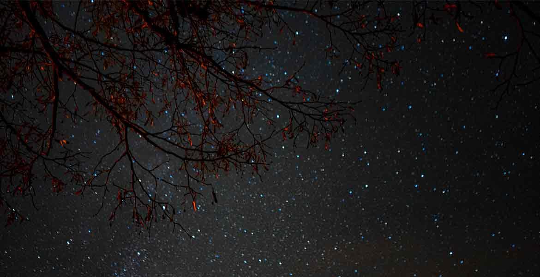 Sternenhimmel mit Ästen im Vordergrund